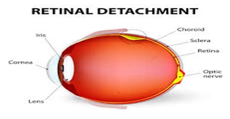 Ocular research papers